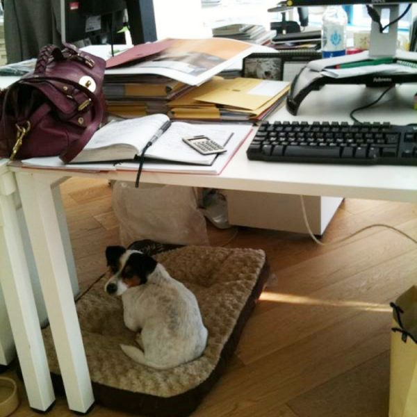 A day in the life of the office dog – we are all learners!